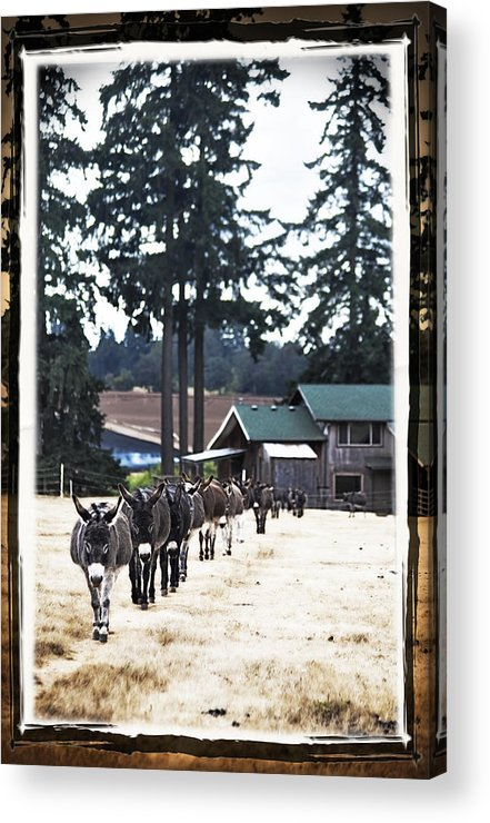 Donkey Acrylic Print featuring the photograph Follow My Lead by Tiana McVay