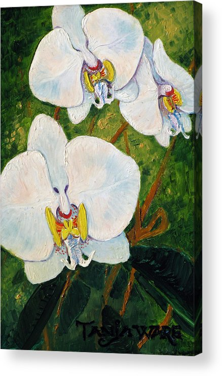 Orchids Acrylic Print featuring the painting Snowy Ladies by Tanja Ware
