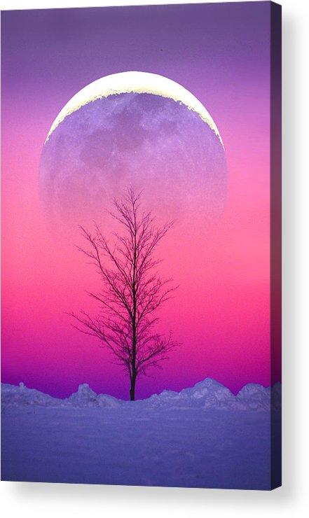 Snow Acrylic Print featuring the photograph Snowy Tree by Larry Landolfi
