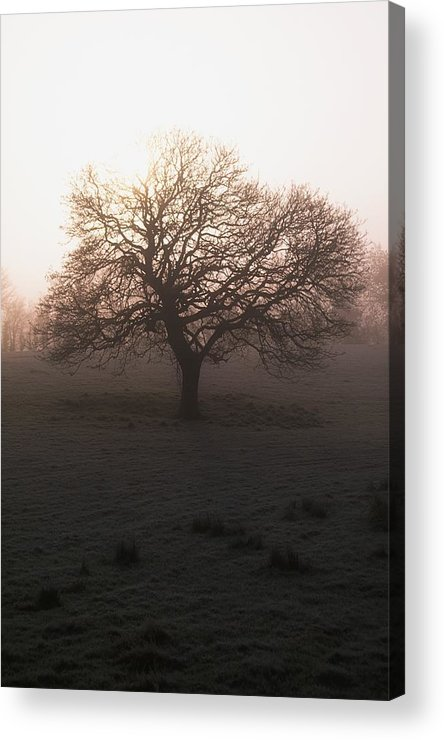 Ireland Acrylic Print featuring the photograph Winter Tree On A Frosty Morning, County by Gareth McCormack