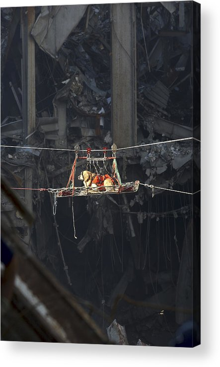 Debris Acrylic Print featuring the photograph A Rescue Dog Is Transported by Stocktrek Images