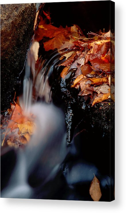 Acrylic Print featuring the photograph Falls Foliage by Jim DeLillo