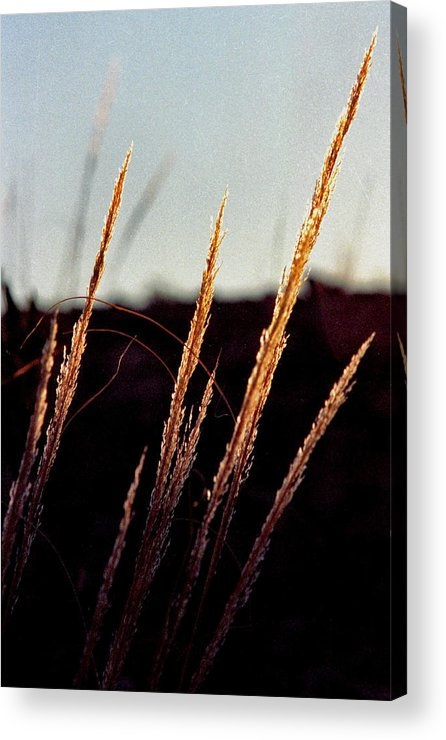 Grass Acrylic Print featuring the photograph Glistening Grass by Randy Oberg