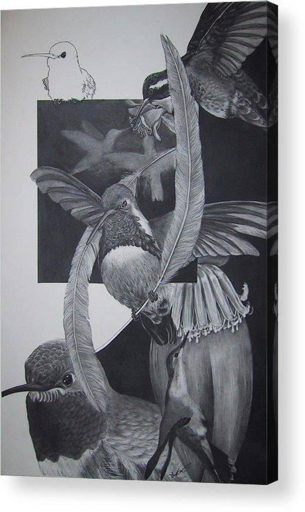 Hummingbird Acrylic Print featuring the drawing Humingbirds by Richard Ong