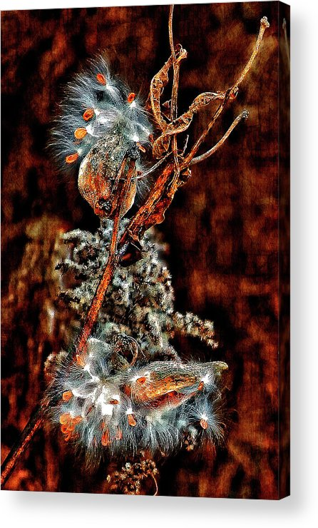 Milkweed Acrylic Print featuring the photograph Lady Of The Dance II by Steve Harrington