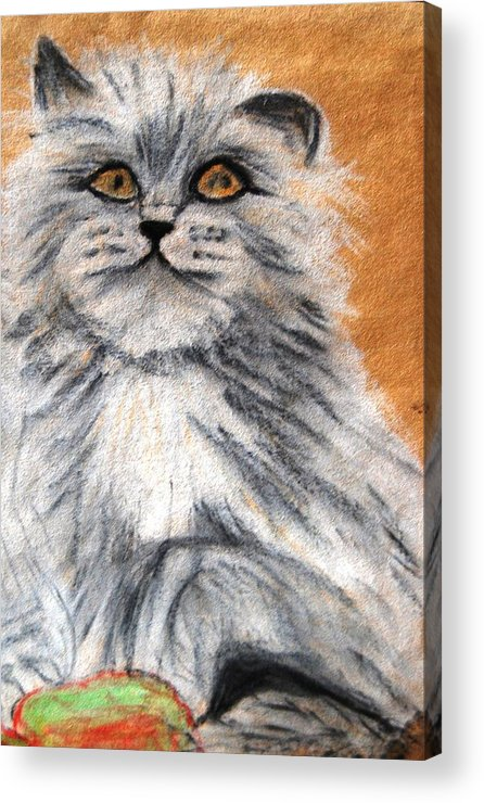 White And Grey Persian Cat Acrylic Print featuring the mixed media Persian Cat by Angela Murray