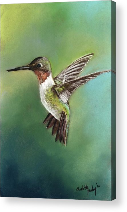 Bird Acrylic Print featuring the painting Ruby Throated Hummingbird by Charlotte Yealey