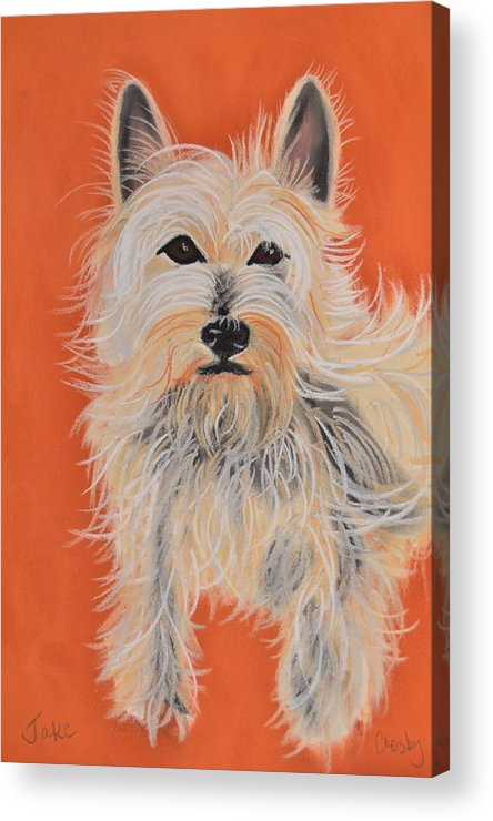 West Highland Terrier Acrylic Print featuring the pastel Serious Westie by Christine Crosby