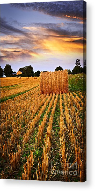 Farm Acrylic Print featuring the photograph Golden Sunset Over Farm Field In Ontario by Elena Elisseeva