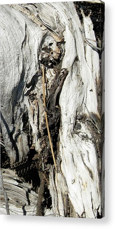 Digital Acrylic Print featuring the photograph Captured In The Wood by Stephanie H Johnson