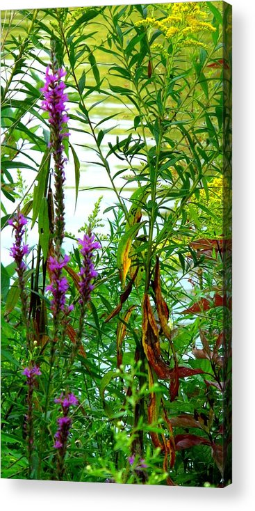 Purple Acrylic Print featuring the photograph Purple And Yellow by Ian MacDonald