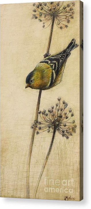 Goldfinch Acrylic Print featuring the drawing Goldfinch by Lori McNee