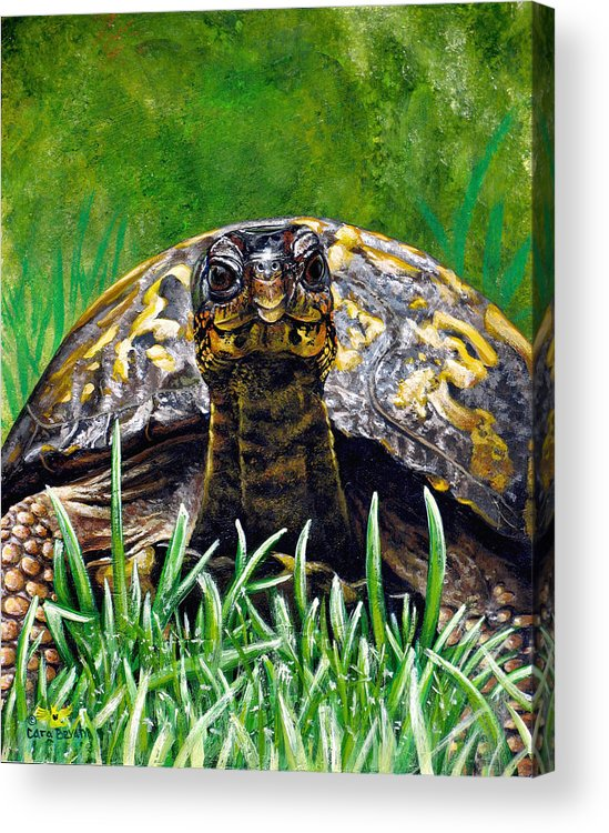 Turtle Acrylic Print featuring the painting Smile by Cara Bevan