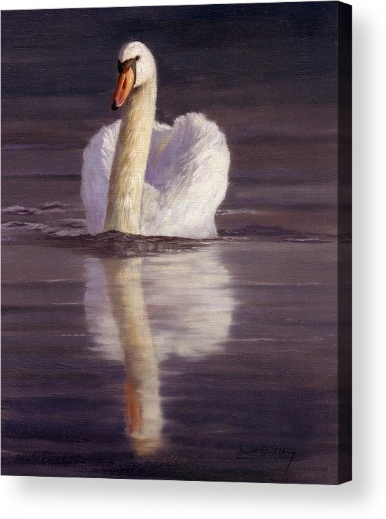 Swan Acrylic Print featuring the painting Swan by David Stribbling