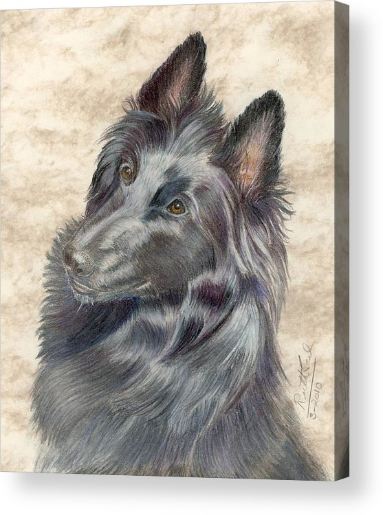 Animals Acrylic Print featuring the painting Belgian Sheepdog by Ruth Seal