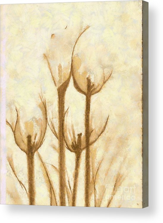 Artwork Acrylic Print featuring the mixed media Flower Sketch by Yanni Theodorou