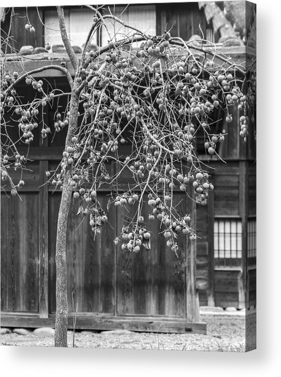 A Kaki Tree Detail Acrylic Print featuring the photograph Japanese Kaki Tree Persimmons by Ronald Steiner