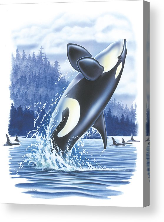 Jon Q Wright Acrylic Print featuring the painting Jumping Orca by JQ Licensing