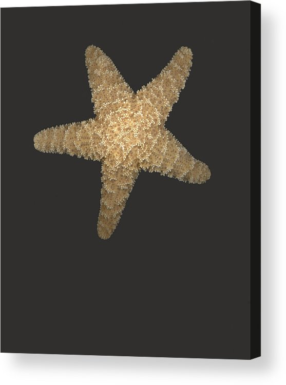 Starfish Acrylic Print featuring the photograph Solo Starfish I by Suzanne Gaff