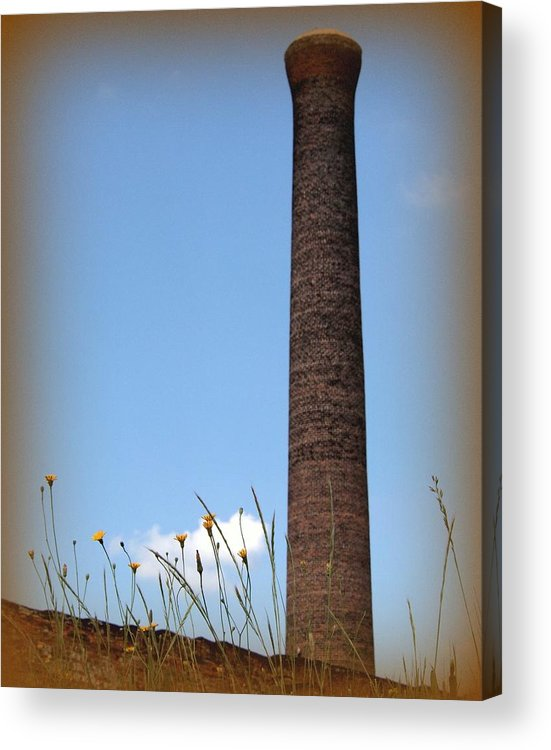 Stack Acrylic Print featuring the photograph Yellow Flowers by Tammy Cantrell