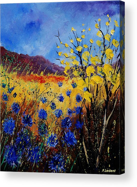Poppies Flowers Floral Acrylic Print featuring the painting Blue Cornflowers by Pol Ledent