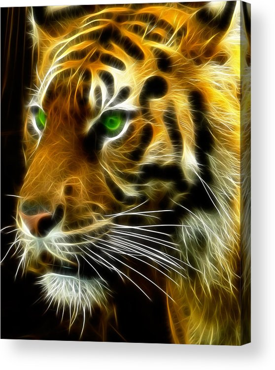 Bengal Acrylic Print featuring the photograph A Tiger's Stare by Ricky Barnard