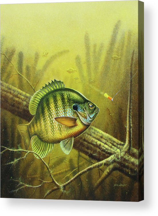 Jon Q Wright Acrylic Print featuring the painting Bluegill And Jig by JQ Licensing