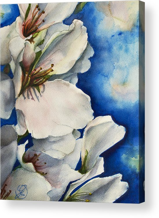 Cherry Acrylic Print featuring the painting Cherry Blossoms by Gae Helton