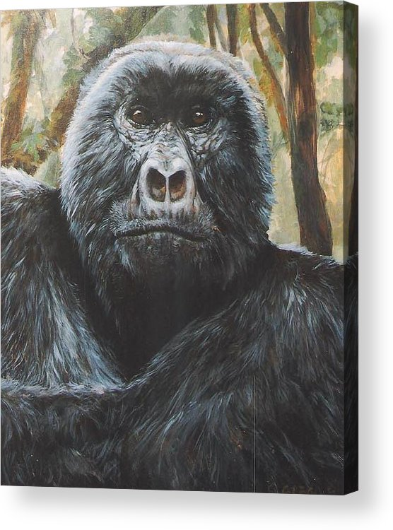 Gorilla Acrylic Print featuring the painting Digit by Steve Greco
