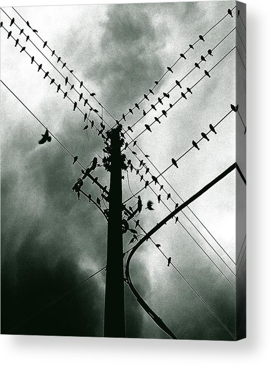 Birds Acrylic Print featuring the photograph Here It Comes by Justin Dyal