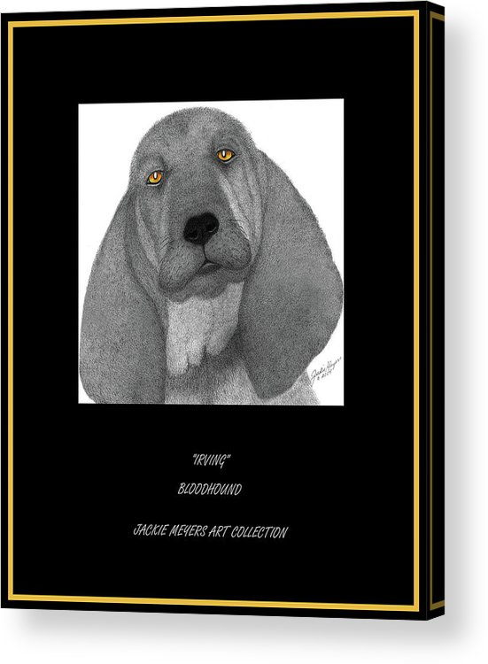 Bloodhounds Acrylic Print featuring the drawing Irving by Jackie Meyers