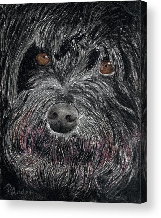 Dog Acrylic Print featuring the drawing Is That A Smile by Brent Ander