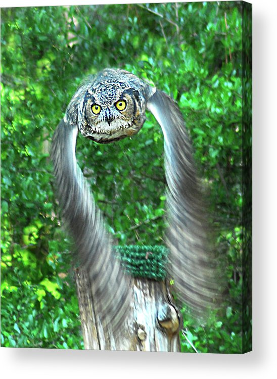 Owl Acrylic Print featuring the photograph Owll In Flight by Jerry Griffin