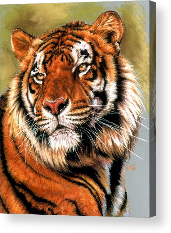 Tiger Acrylic Print featuring the pastel Power And Grace by Barbara Keith