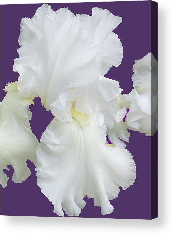 Iris Acrylic Print featuring the photograph Regal Iris by Ellen B Pate