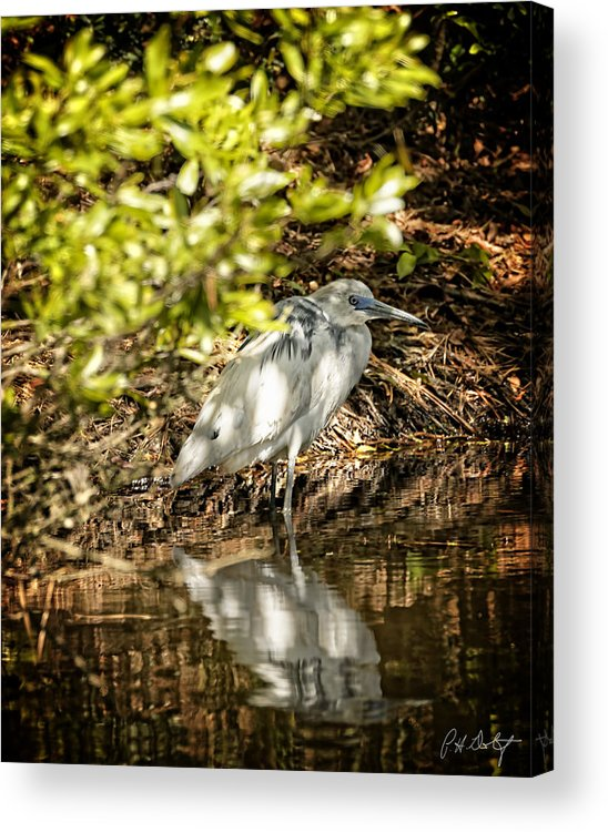 April Acrylic Print featuring the photograph Waiting To Be Blue by Phill Doherty