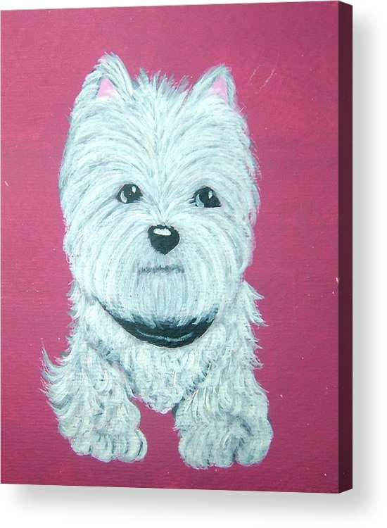 West Highland Terrier Acrylic Print featuring the painting Westie by Tammy Brown