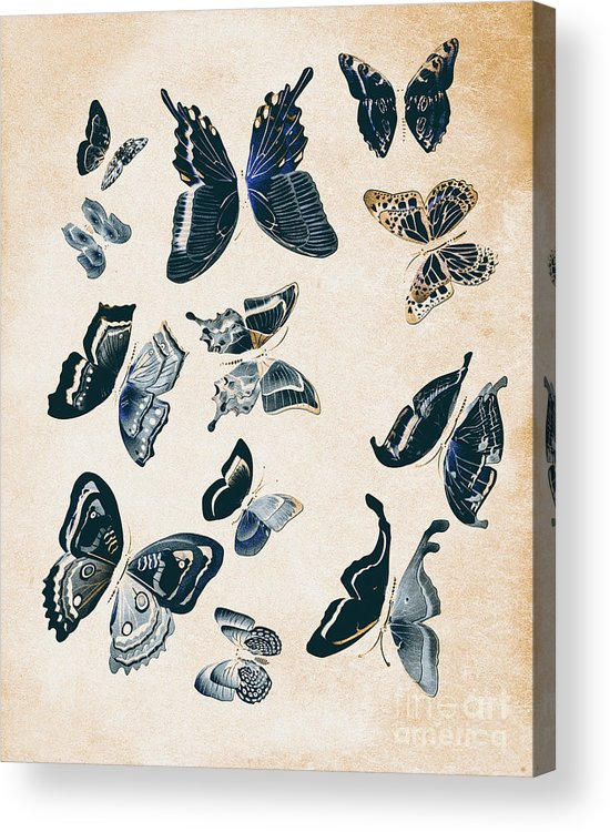 Antique Acrylic Print featuring the photograph Scrapbook Butterflies by Jorgo Photography - Wall Art Gallery
