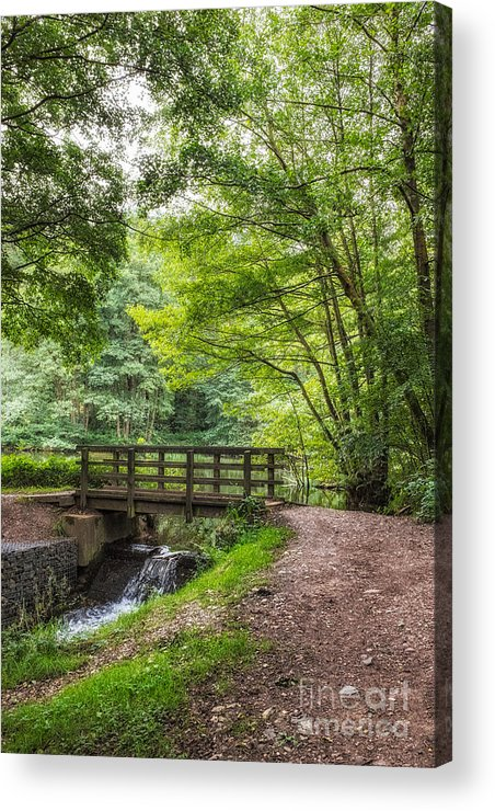 Cannock Chase Acrylic Print featuring the photograph The Bridge Birches Valley Cannock Chase by Ann Garrett