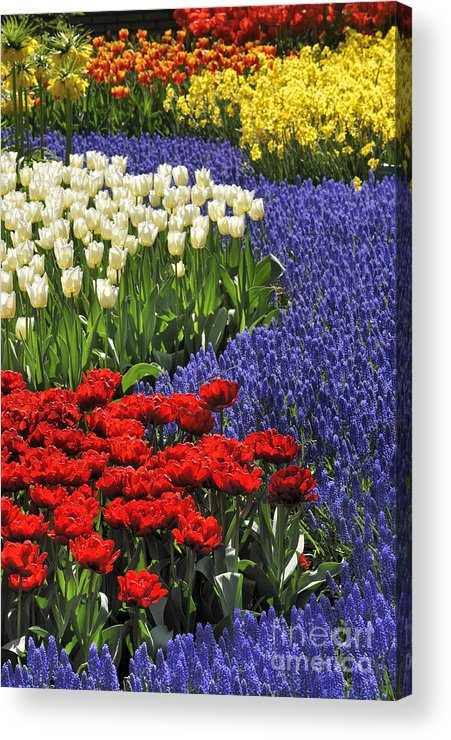 Colourful Acrylic Print featuring the photograph 090811p122 by Arterra Picture Library