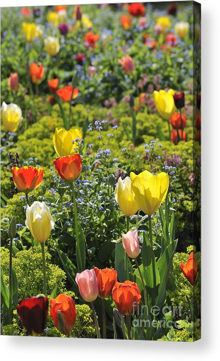 Colourful Acrylic Print featuring the photograph 090811p129 by Arterra Picture Library