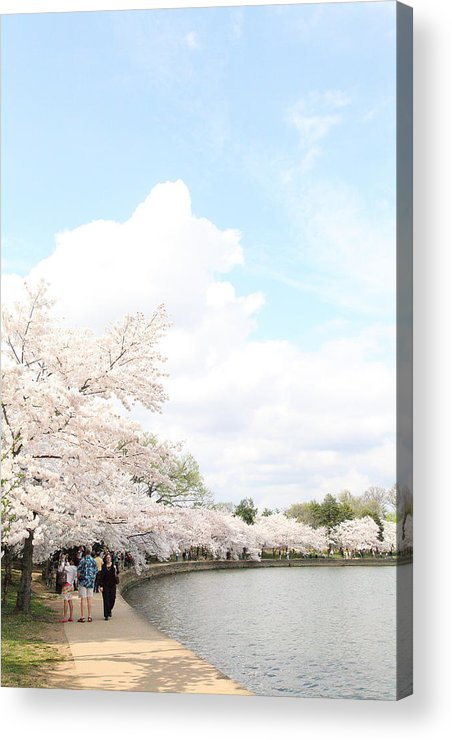 America Acrylic Print featuring the photograph Cherry Blossoms - Washington Dc - 01131 by DC Photographer