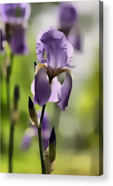Digital Art Acrylic Print featuring the digital art Iris by John Delong