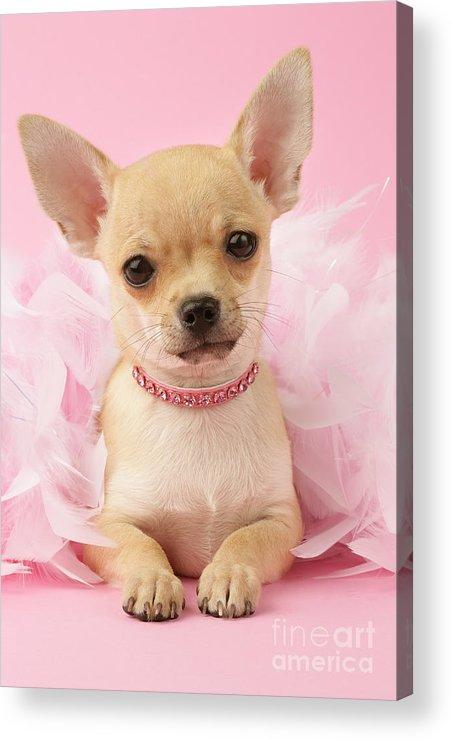 Puppy Acrylic Print featuring the digital art Pink Times by Greg Cuddiford