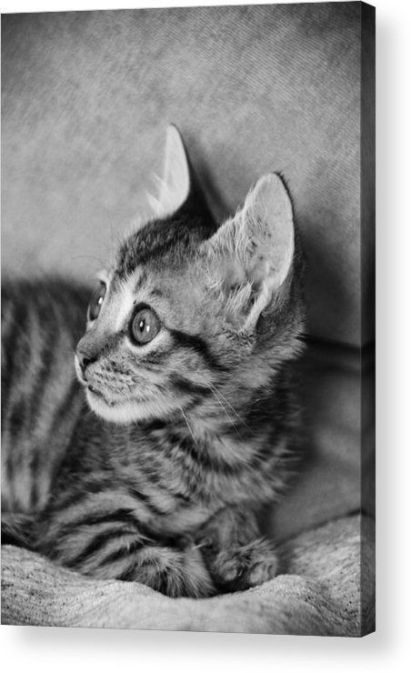 Jezcself Acrylic Print featuring the photograph What's That by Jez C Self