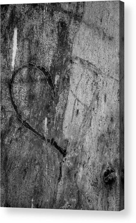 People Carve Names Into A Tree Acrylic Print featuring the photograph Amore by Marit Runyon
