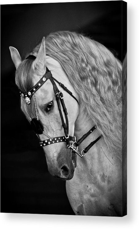 Andalusian Acrylic Print featuring the photograph Andalusian by Wes and Dotty Weber