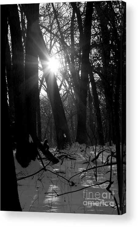 Sun Acrylic Print featuring the photograph Awakening by Rick Rauzi