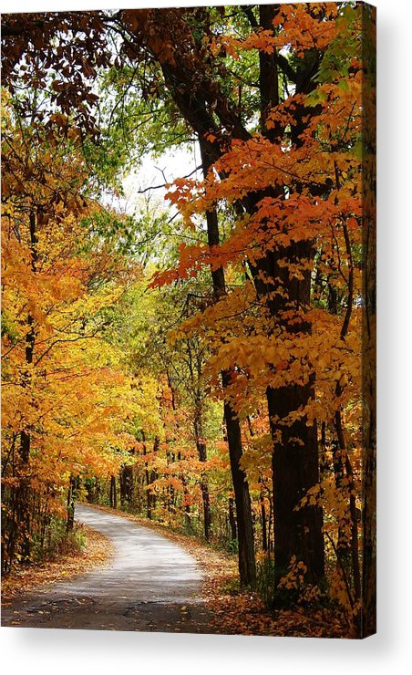 Woodland Acrylic Print featuring the photograph A Drive Through The Woods by Bruce Bley