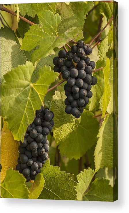 Crop Acrylic Print featuring the photograph A Pair Of Clusters by Jean Noren